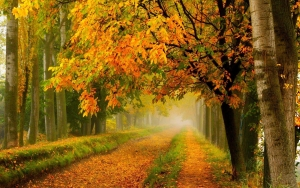 Autumn foliage path